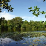 Highams Park Lake