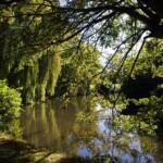 The moat at Pleshey