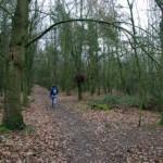 Linnets Wood