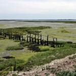 Looking out to Gore Saltings