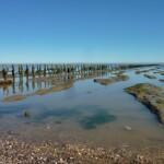 High-tide mark near Middlewick Farm