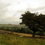 from Marten Hill
