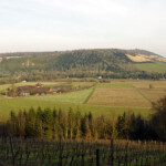 Denbies vineyard and Box Hill