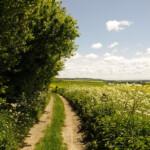 Pilgrim's Way