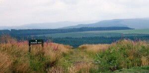 Redesdale Forest