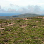 Moorland before the Cape
