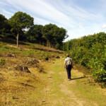 Approaching Bigbury Camp