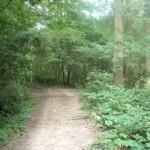 Hamstreet woods