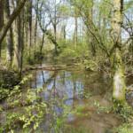 Wey & Arun canal