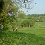 Above Conghurst Farm