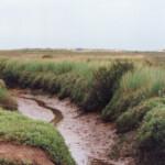 Stiffkey marshes