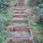 A few of 169 steps