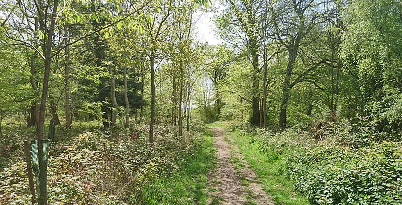 near Swyncombe