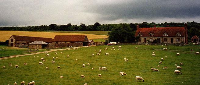 Gumber farm